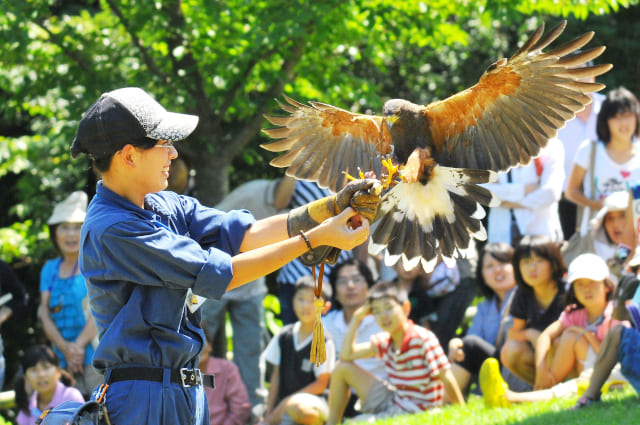 Matsue Vogel Park